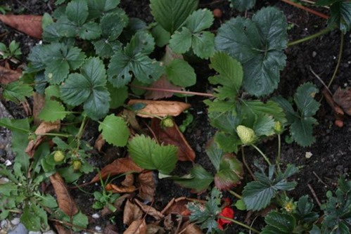 20081021a (Small)